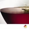 image de Dégustation de vins rouges d'Anjou