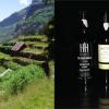 Initiation aux vins de Madère