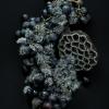 Vins en dentelle